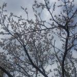 Ծաղկած ծառերի դիտարկում