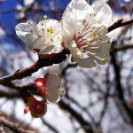 «Գովք բնության, ծառ ու ծաղկի» երաժշտական ֆլեշմոբը շարունակվում է